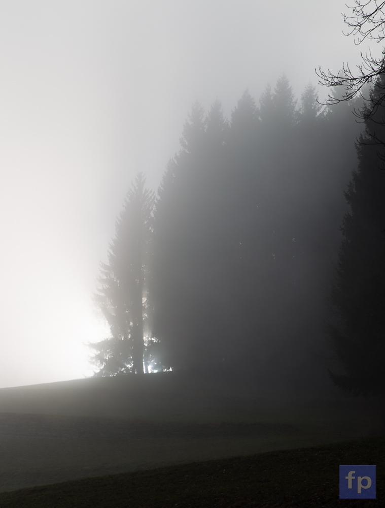Nebel am Waldrand