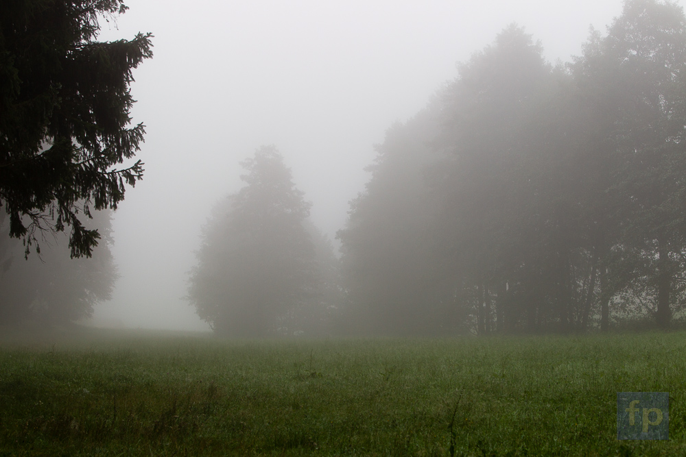 Morgennebel im Holzland